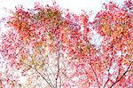 Autumn leaves Stock Photo - Premium Royalty-Freenull, Code: 622-06487747