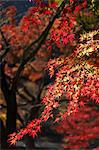 Autumn leaves Stock Photo - Premium Royalty-Free, Artist: Cusp and Flirt, Code: 622-06487749