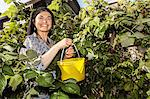Smiling woman picking fruit in garden Stock Photo - Premium Royalty-Free, Artist: Blend Images, Code: 649-06488958
