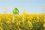 Model house in field of flowers Stock Photo - Premium Royalty-Free, Artist: ableimages, Code: 649-06489087