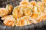 Close up of basket of roses Stock Photo - Premium Royalty-Free, Artist: Cultura RM, Code: 649-06489132