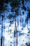 Blurred view of trees in forest Stock Photo - Premium Royalty-Free, Artist: Minden Pictures, Code: 649-06489360
