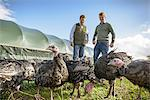 Farmers with turkeys on free range farm Stock Photo - Premium Royalty-Free, Artist: Robert Harding Images, Code: 649-06489534