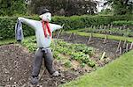 Scarecrow in Allotment Stock Photo - Premium Rights-Managed, Artist: foodanddrinkphotos, Code: 824-06493529