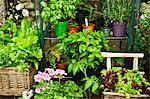 Various herbs, lettuce and flowers in pots in a garden Stock Photo - Premium Royalty-Free, Artist: photo division, Code: 659-06493677