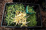 Green and Waxed Beans in a Crate at a Farmer's Market Stock Photo - Premium Royalty-Free, Artist: Science Faction, Code: 659-06493689