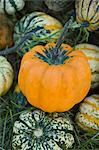 Assorted ornamental gourds Stock Photo - Premium Royalty-Free, Artist: Jean-Christophe Riou, Code: 659-06494079