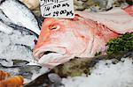 A fresh fish on ice with a price label Stock Photo - Premium Royalty-Freenull, Code: 659-06494328