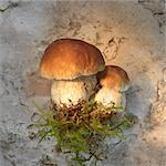 Porcini mushrooms with moss Stock Photo - Premium Royalty-Free, Artist: Ty Milford, Code: 659-06495797