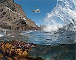 Underwater photo of Anacapa arch, kelp and birds, Channel Islands National Park, California, United States of America, North America Stock Photo - Premium Rights-Managed, Artist: Robert Harding Images, Code: 841-06499343