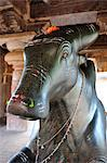 Bull Nandi at Pattadkal, Karnataka, India, Asia Stock Photo - Premium Rights-Managed, Artist: Robert Harding Images, Code: 841-06499727