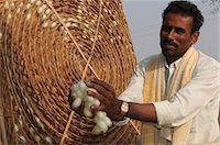 silky - Silk farmer with cocoons, Kanakpura, Karnataka, India, Asia Stock Photo - Premium Rights-Managednull, Code: 841-06499737