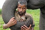 A mahout with his pet elephant, Kaziranga, Assam, India, Asia Stock Photo - Premium Rights-Managed, Artist: Robert Harding Images, Code: 841-06499772