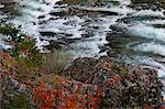 Bow River and lichens along the river, Banff, Canada, North America Stock Photo - Premium Rights-Managed, Artist: Robert Harding Images, Code: 841-06499831