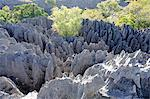 Tsingy de Bemaraha Strict Nature Reserve, UNESCO World Heritage Site, near the western coast in Melaky Region, Madagascar, Africa Stock Photo - Premium Rights-Managed, Artist: Robert Harding Images, Code: 841-06500279