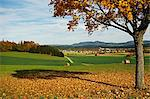Rural autumn scene with Lauffen village, near Villingen-Schwenningen, Black Forest, Schwarzwald-Baar, Baden-Wurttemberg, Germany, Europe Stock Photo - Premium Rights-Managed, Artist: Robert Harding Images, Code: 841-06500603