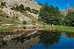 Lakes of Bozzone, Matanna Mountain (Monte Matanna), Apuan Alps (Alpi Apuane), Lucca Province, Tuscany, Italy, Europe Stock Photo - Premium Rights-Managed, Artist: Robert Harding Images, Code: 841-06500786