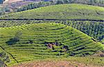 Tea plantation in the mountains of Munnar, Kerala, India, Asia Stock Photo - Premium Rights-Managed, Artist: Robert Harding Images, Code: 841-06501015