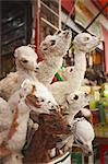 Stuffed baby llamas in Witches' Market, La Paz, Bolivia, South America Stock Photo - Premium Rights-Managed, Artist: Robert Harding Images, Code: 841-06501831