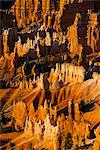 Close up of the pinnacles, beautiful rock formations of Bryce Canyon National Park at sunset, Utah, United States of America, North America Stock Photo - Premium Rights-Managed, Artist: Robert Harding Images, Code: 841-06502456