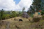 Traditional huts, Omo region, Chencha, Dorze, Ethiopia, Africa Stock Photo - Premium Rights-Managed, Artist: Robert Harding Images, Code: 841-06503325