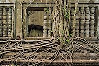 Ta Prohm Temple, Angkor, UNESCO World Heritage Site, Siem Reap, Cambodia, Indochina, Southeast Asia, Asia Stock Photo - Premium Rights-Managednull, Code: 841-06503421