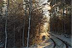 Person Walking on Country Road Through Forest in Winter, near Villingen-Schwenningen, Baden-Wuerttemberg, Germany Stock Photo - Premium Rights-Managed, Artist: Jochen Schlenker, Code: 700-06505763