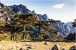 Aiguilles de Bavella (Bavella Needles) and pine trees on the 1,218 m Col de Bavella (Bavella pass), Corsica, France Stock Photo - Premium Rights-Managed, Artist: F. Lukasseck, Code: 700-06512750