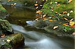 Forest Stream in Autumn, Bavarian Forest National Park, Bavarian Forest, Bavaria, Germany Stock Photo - Premium Royalty-Free, Artist: David & Micha Sheldon, Code: 600-06531345