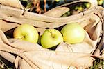 Golden delicious apples in bag on a apple orchard, Kelowna, British Columbia, Canada Stock Photo - Premium Rights-Managed, Artist: Sarah Murray, Code: 700-06531376