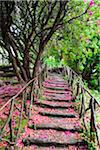 Footpath with Rhododendron Flowers on Ground, Queimadas, Madeira, Portugal Stock Photo - Premium Rights-Managed, Artist: F. Lukasseck, Code: 700-06531540