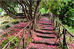 Footpath with Rhododendron Flowers on Ground, Queimadas, Madeira, Portugal Stock Photo - Premium Rights-Managed, Artist: F. Lukasseck, Code: 700-06531541