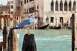 Seagull perched on wooden post Stock Photo - Premium Royalty-Free, Artist: ableimages, Code: 649-06533208