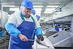 Workers cleaning fish in factory Stock Photo - Premium Royalty-Free, Artist: ableimages, Code: 649-06533423