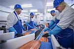 Workers cleaning fish in factory Stock Photo - Premium Royalty-Free, Artist: Westend61, Code: 649-06533429