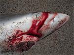 Detail of a dead shark on a beach