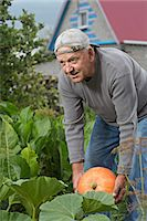 A senior man picking up a pumpkin from his garden Stock Photo - Premium Royalty-Freenull, Code: 653-06534681
