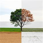 Solitary tree shown in all four seasons Stock Photo - Premium Royalty-Freenull, Code: 6106-06535776