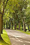Endless Road with Trees Stock Photo - Premium Royalty-Free, Artist: Transtock, Code: 6106-06536651