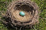 Blue egg in bird's nest Stock Photo - Premium Royalty-Free, Artist: Ikon Images, Code: 614-06536912