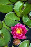 Water lilies floating in pond Stock Photo - Premium Royalty-Free, Artist: Frank Krahmer, Code: 614-06537418