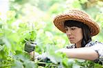 Woman working in garden Stock Photo - Premium Royalty-Free, Artist: Minden Pictures, Code: 614-06537595