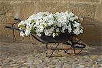 Petunias planted in an old wheelbarrow Stock Photo - Premium Royalty-Free, Artist: Robert Harding Images, Code: 618-06538622