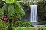 Australia, Queensland, Millaa Millaa.  Millaa Millaa Falls on the Atherton Tablelands near Cairns. Stock Photo - Premium Rights-Managed, Artist: AWL Images, Code: 862-06540735