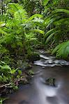 Australia, Queensland, Mossman.  Rainforest stream at Mossman Gorge in the Daintree National Park. Stock Photo - Premium Rights-Managed, Artist: AWL Images, Code: 862-06540737