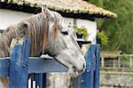 Thoroughbred horse at the stables at Hacienda Zuleta, Ecuador Stock Photo - Premium Rights-Managed, Artist: AWL Images, Code: 862-06541256