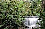 Waterfall in the cloudforest at Sachatamia, Ecuador Stock Photo - Premium Rights-Managed, Artist: AWL Images, Code: 862-06541265