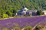 Blooming field of Lavender , Lavandula angustifolia, in front of Senanque Abbey, Gordes, Vaucluse, Provence Alpes Cote dAzur, Southern France, France Stock Photo - Premium Rights-Managed, Artist: AWL Images, Code: 862-06541719