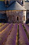 Blooming field of Lavender , Lavandula angustifolia, in front of Senanque Abbey, Gordes, Vaucluse, Provence Alpes Cote dAzur, Southern France, France Stock Photo - Premium Rights-Managed, Artist: AWL Images, Code: 862-06541724