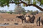 Elephants and Kongoni at a waterhole in Tsavo East National Park. Stock Photo - Premium Rights-Managed, Artist: AWL Images, Code: 862-06542171